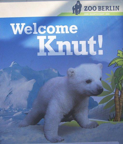 WelcomeKnut